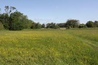 Pickering's Meadow