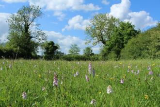 Willoughby Meadow