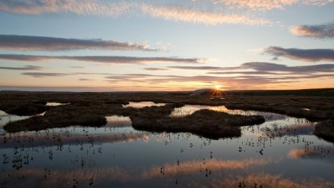 Dawn sky over peatbog landscape
