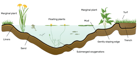 Wildlife Pond Diagram
