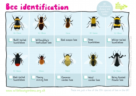 Bee identification guide