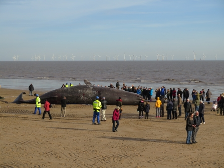 Sperm Whale Seacroft