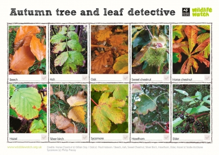 Autumn Tree Spotter Guide
