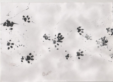 Hedgehog prints