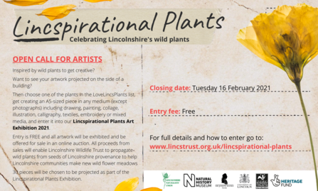 Lincspirational Plants call for artists