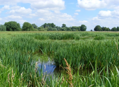 Baston Fen